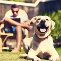 OFFERS General: Pet Waste Removal Service