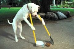 OFFERS General: Poo Happens Pet Waste Removal